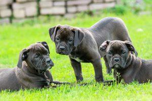 puppy-1785772_960_720